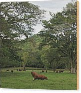 Rainforest At Ys River Wood Print