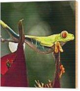 Red Eyed Tree Frog 1 Wood Print