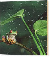 Red-eyed Tree Frog In The Rain Wood Print