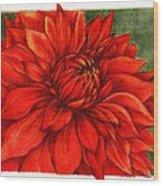 Red Mums Wood Print
