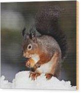 Red Squirrel Wood Print