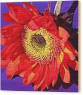 Red Sunflower Wood Print