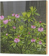 Rhododendron In Del Norte State Park, Ca Wood Print