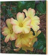 Rhododendron 'toff' Wood Print