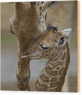 Rothschild Giraffe And Calf Wood Print