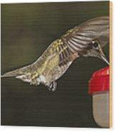Ruby-throat Hummingbird Wood Print