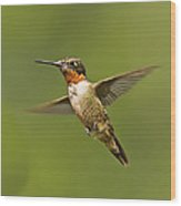Ruby Throated Hummingbird In Flight Wood Print