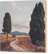 Rural Road With Cypress Tree In Tuscany Italy Wood Print by Matteo Colombo