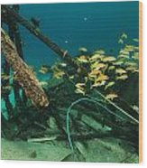 Safari Boat Wreckage And Aquatic Life In The Red Sea. Wood Print