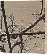 Sagamihara Asamizo Park 17b Wood Print