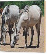 Salt River Wild Horses Wood Print