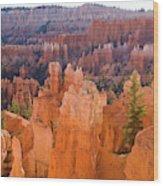 Sandstone Hoodoos Bryce Canyon  Wood Print