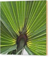 Saw Palmetto  Wood Print