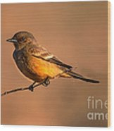 Say's Phoebe Wood Print by Robert Bales