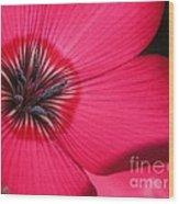 Scarlet Flax Wood Print
