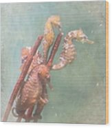 Sea Horses Wood Print by Angie Vogel