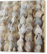 Sea Shell Decorations Wood Print
