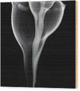 Sea Shell, X-ray Wood Print