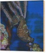 Seahorse And Coral Wood Print