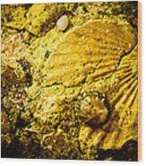 Seashell In Stone Wood Print