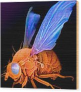 Sem Of A Fly Drosophila Wood Print