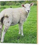 Sheep In Field Wood Print