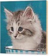Sibirian Cat Kitten Wood Print by Doreen Zorn
