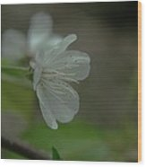 Side View Of A Blossom Wood Print