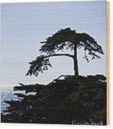 Silhouette Of Monterey Cypress Tree Wood Print
