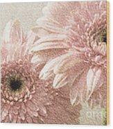 2 Silver Pink Painterly Gerber Daisies Wood Print