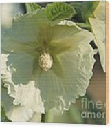Single Buttercream Hollyhock Wood Print