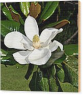 Single Magnolia Wood Print