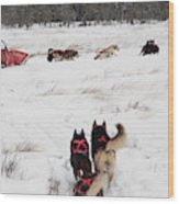 Sled Dog Wood Print