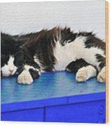 Sleeping Cat In Sifnos Island Wood Print