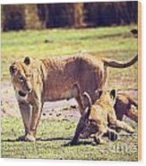 Small Lion Cubs With Mother. Tanzania Wood Print