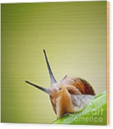 Snail On Green Stem Wood Print by Johan Swanepoel