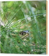 Snake In The Grass Wood Print