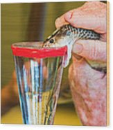 Snake Venom Extraction Wood Print