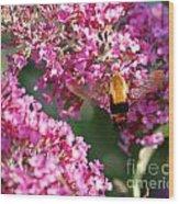Snowberry Clearwing Hummingbird Moth Wood Print