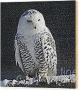 Snowy Owl On A Twilight Winter Night Wood Print