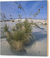 Soaptree Yucca In Gypsum Dunes White Wood Print