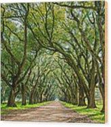 Southern Journey  Wood Print