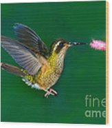 Speckled Hummingbird Wood Print