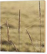 Spider Webs In Field On Tall Grass Wood Print