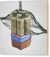 Spinal Cord Wood Print