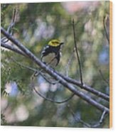 Spring Black-throated Green Warbler Wood Print