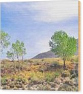 Spring In The Desert Wood Print