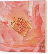 Stockton Rose Wood Print