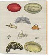 Strange Molluscs Wood Print