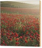 Stunning Poppy Field Landscape Under Summer Sunset Sky Wood Print